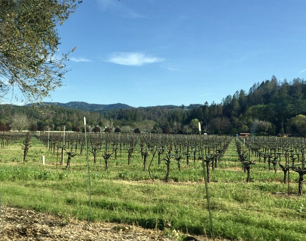 vineyards visible from the road in napa valley
