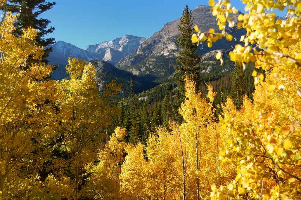 golden aspen trees in front of a mountain peak