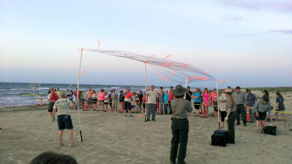 Crowd gathers on Padre Island beach to watch officials release baby sea turtles