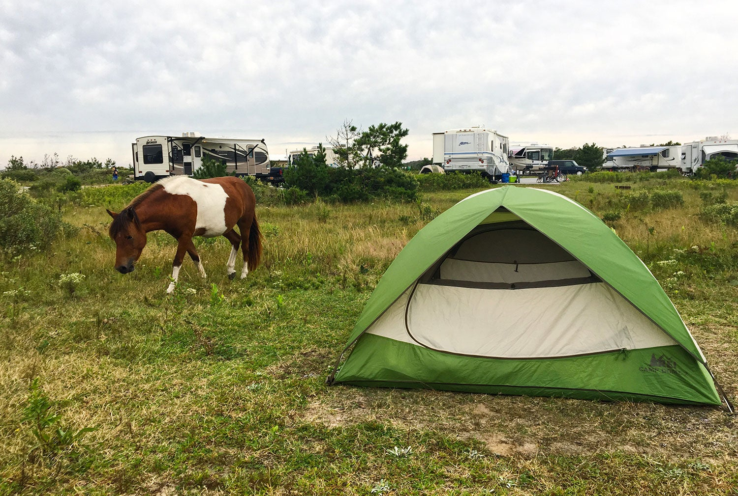 pony grazes beside green tent in a group camping field