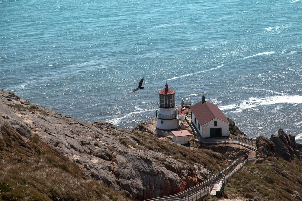 looking down at the point reyes lighthouse from above as a bird flies over the water