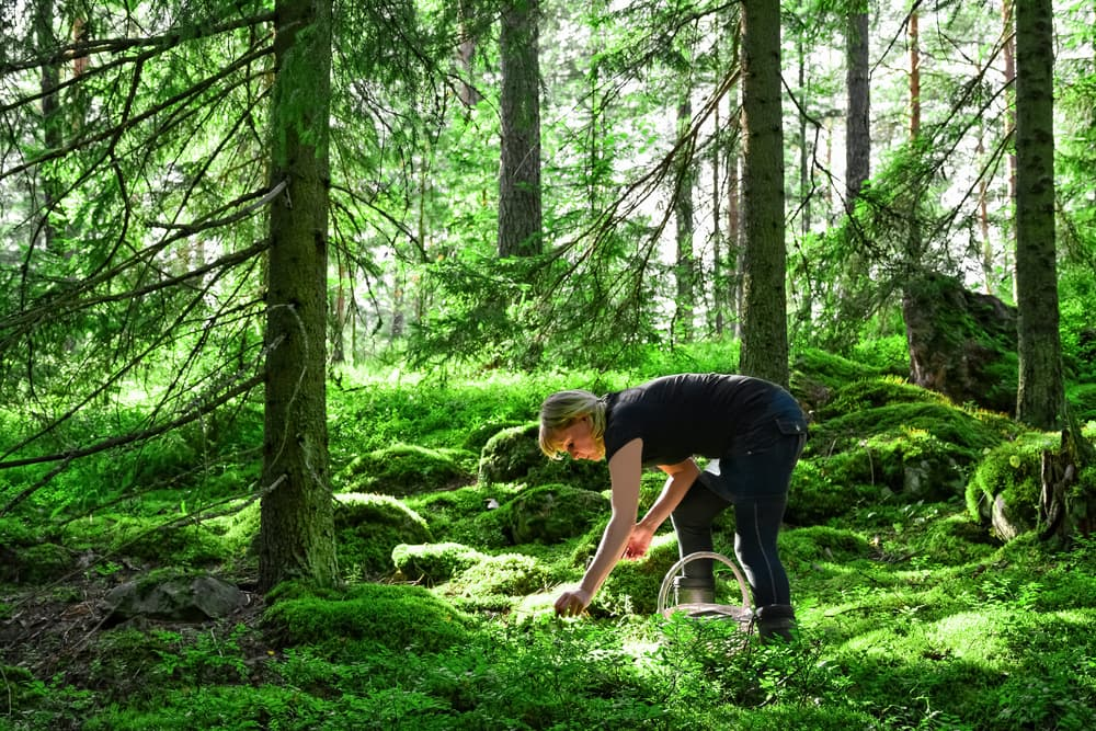 woman wearing black foraging for food in lush green forest