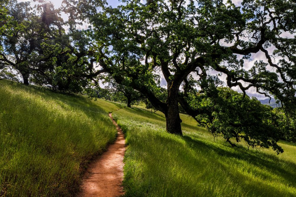 cycling trail leading through henry w. coe state park
