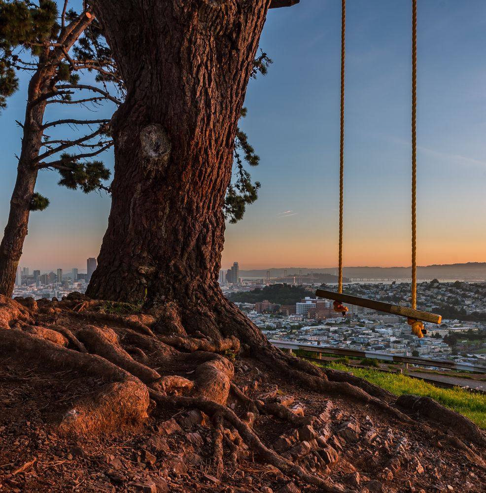 rope swing hangs from tree in foreground with sunset over san francisco in the background