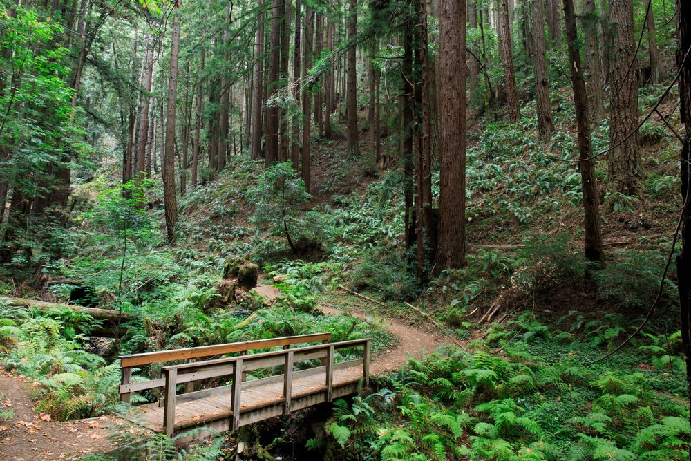 wooded trail leading to Purisima creek in california