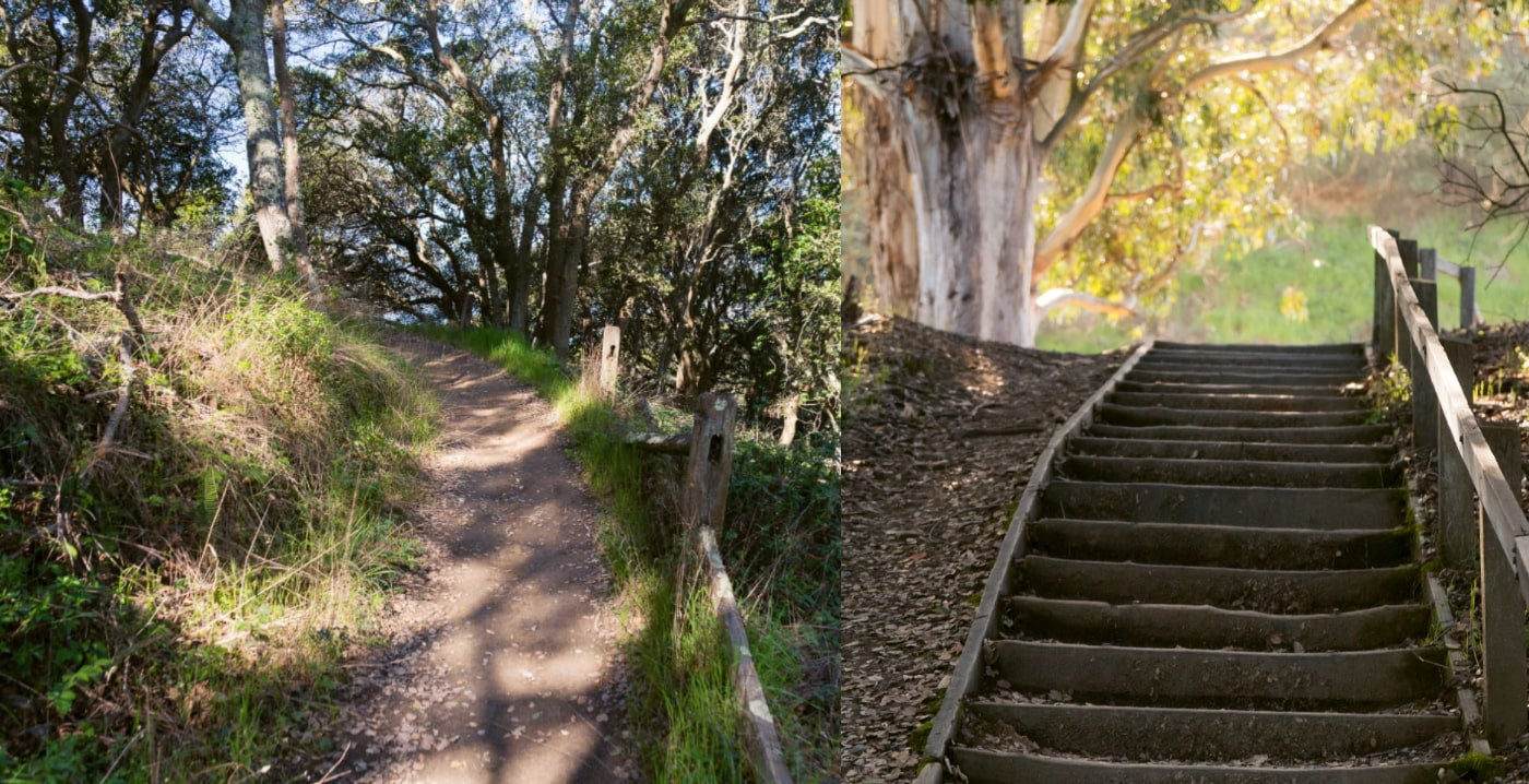 (left): An eroded trail curves up to left in a dry wooded area (right): Fall foliage surrounds a shaded wooden stairway