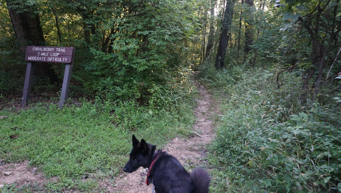 "Black dog standing in front of weathered path in the woods near a sign that reads ""Cranberry Trail"""