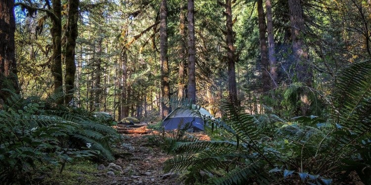 tents nestled between trees in the distance at wooded campground in oregon