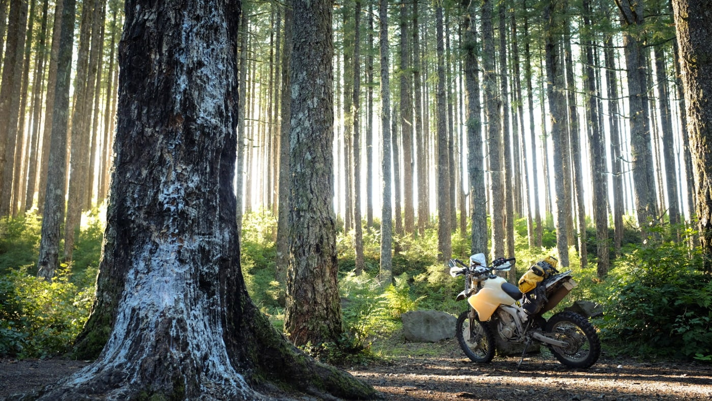 A yellow and white dirt bike rests in the center of an evergreen forest covered with ferns and illuminated by sunlight.