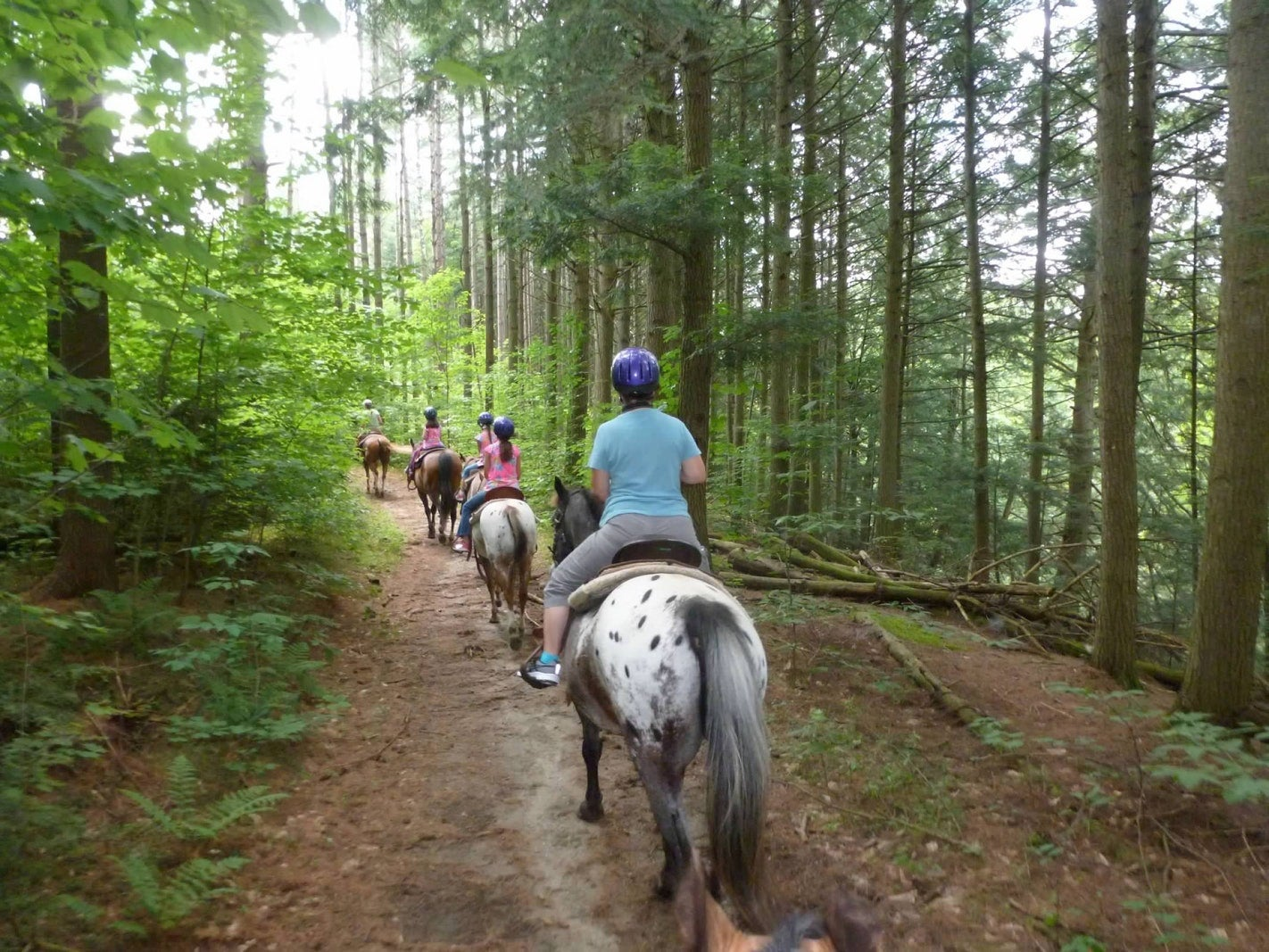 four people ride horses on a riding trail in the forest of hanging rock state park