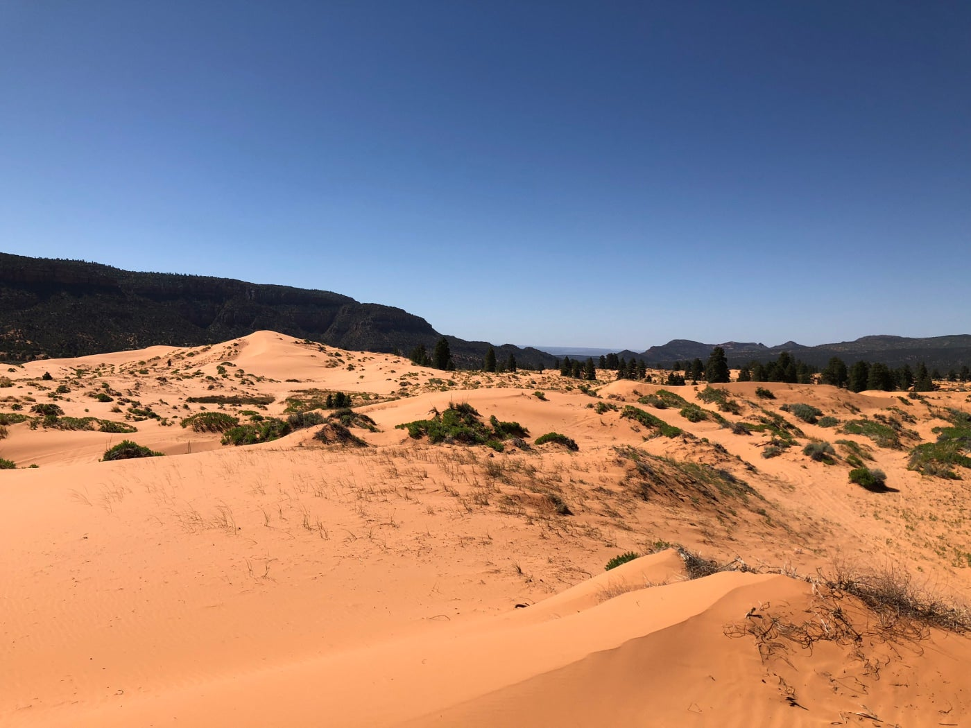 Landscape of the coral pink sand dunes scattered with brush and surrounded by dark hills.