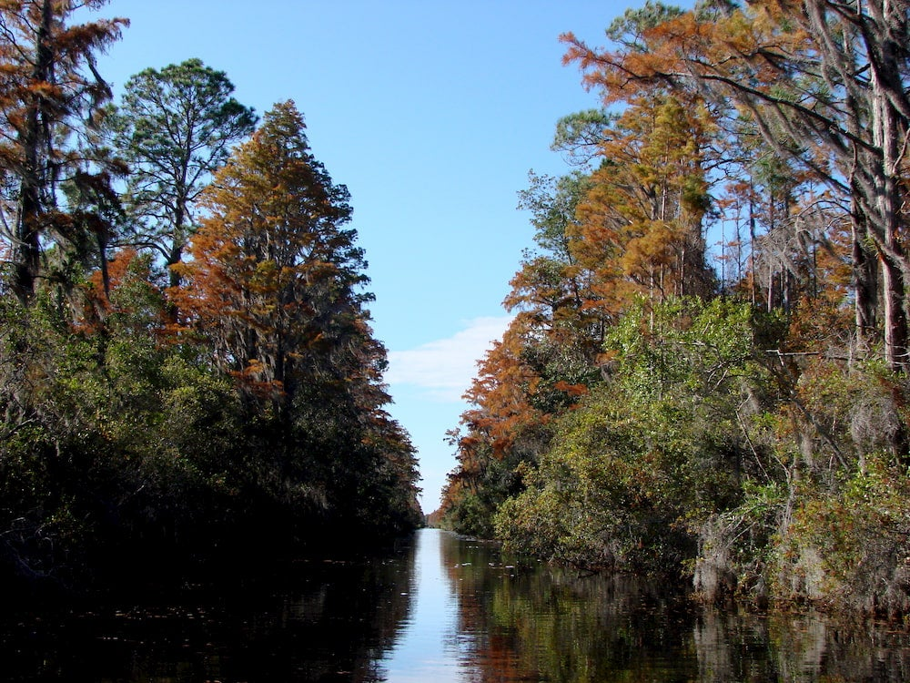 Panoramic photo of swamp with trees on either side of water.