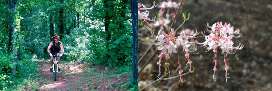 Left: Mountain biker riding on trail in forest. Right: Macro shot of blooming pink and white flower