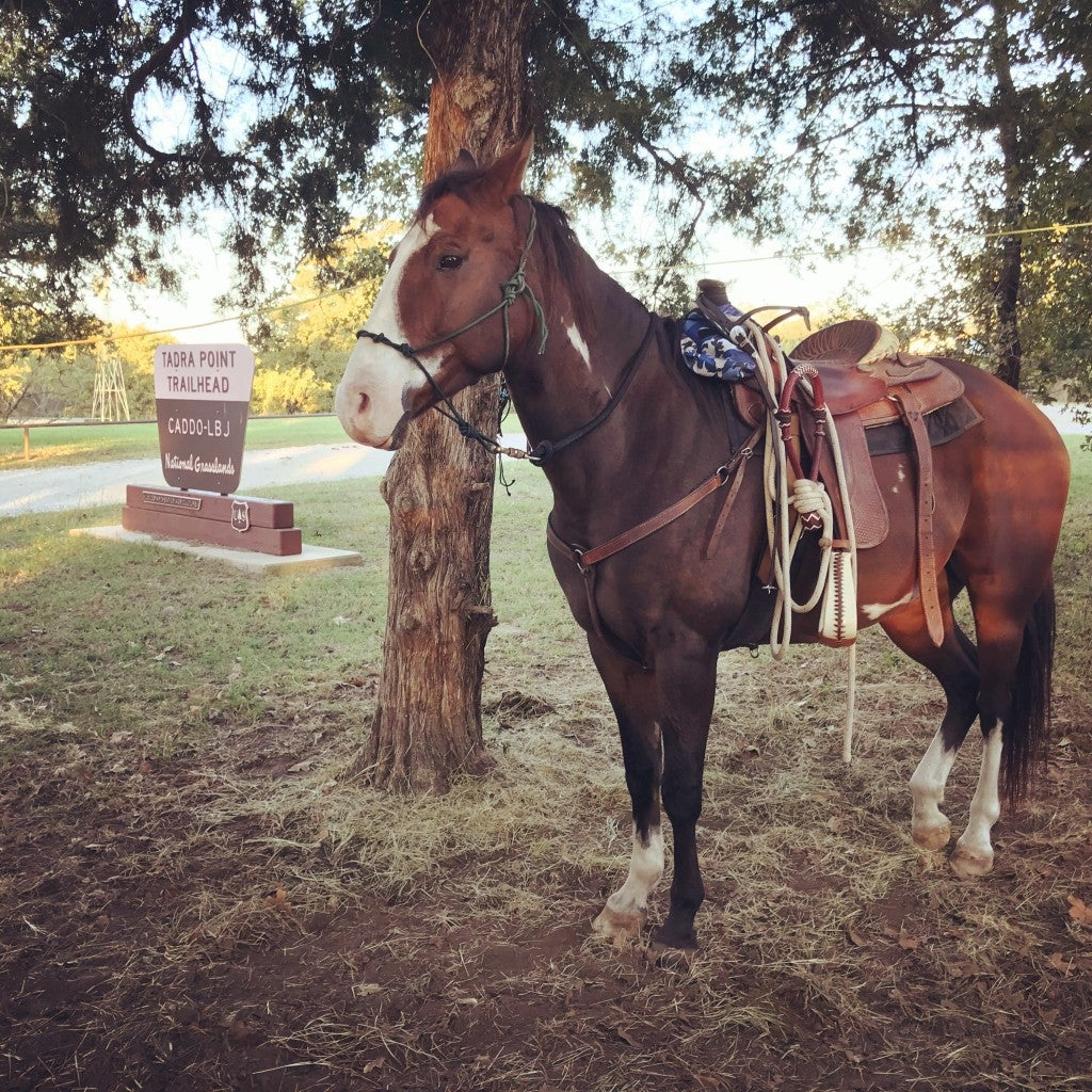 Horse saddled up in western tack and tied to a tree outside the state park.