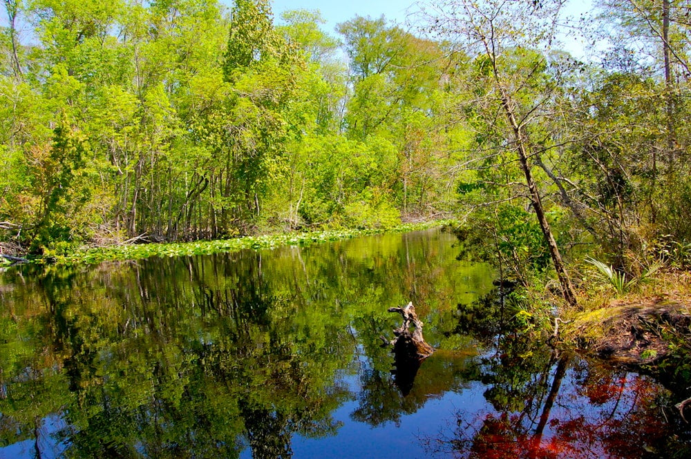 Wide angle view trees reflecting on still river water