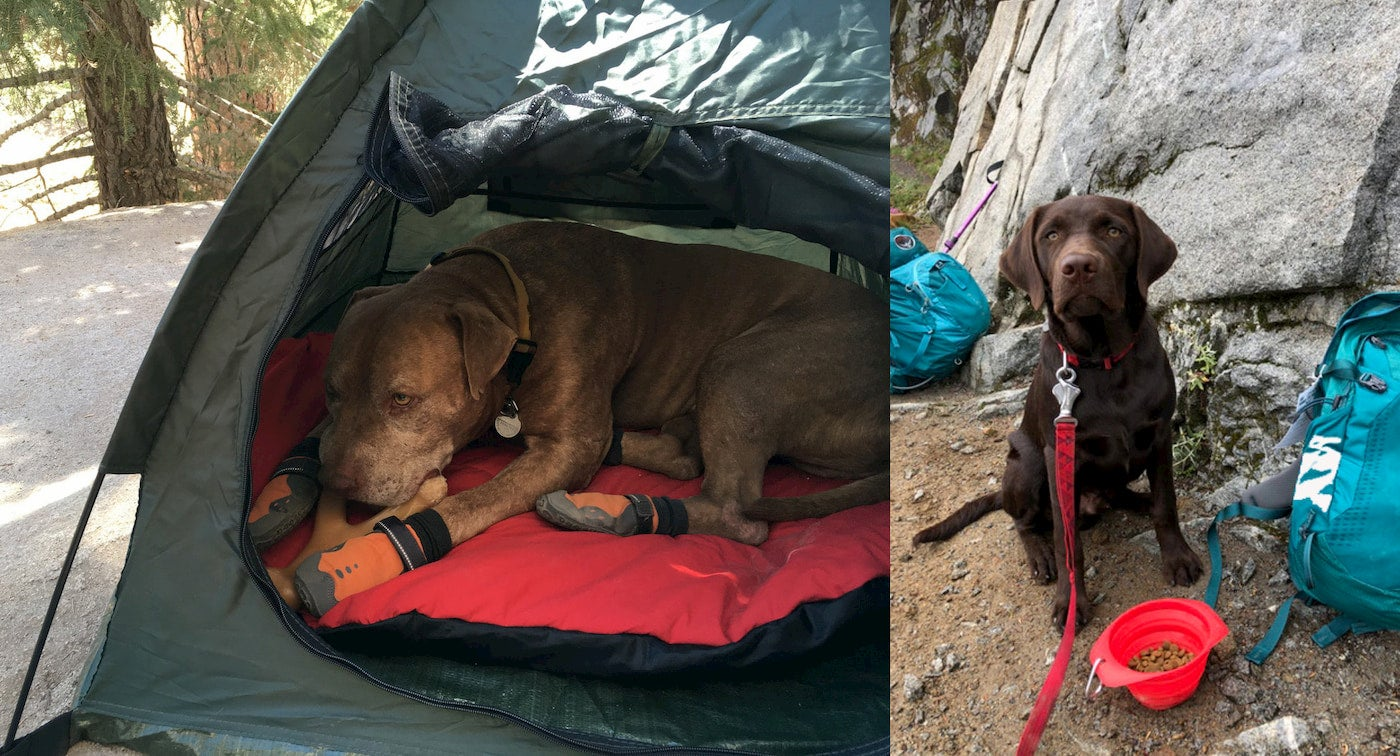 Left: Dog wearing booties and sleeping in tent. Right: Puppy in front of collapsible water bowl.