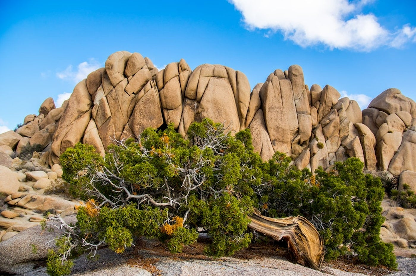 Rock formations of Joshua Tree against a blue sky.