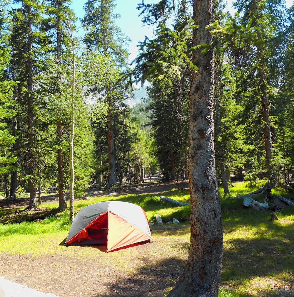 Orange tent set up among pine trees