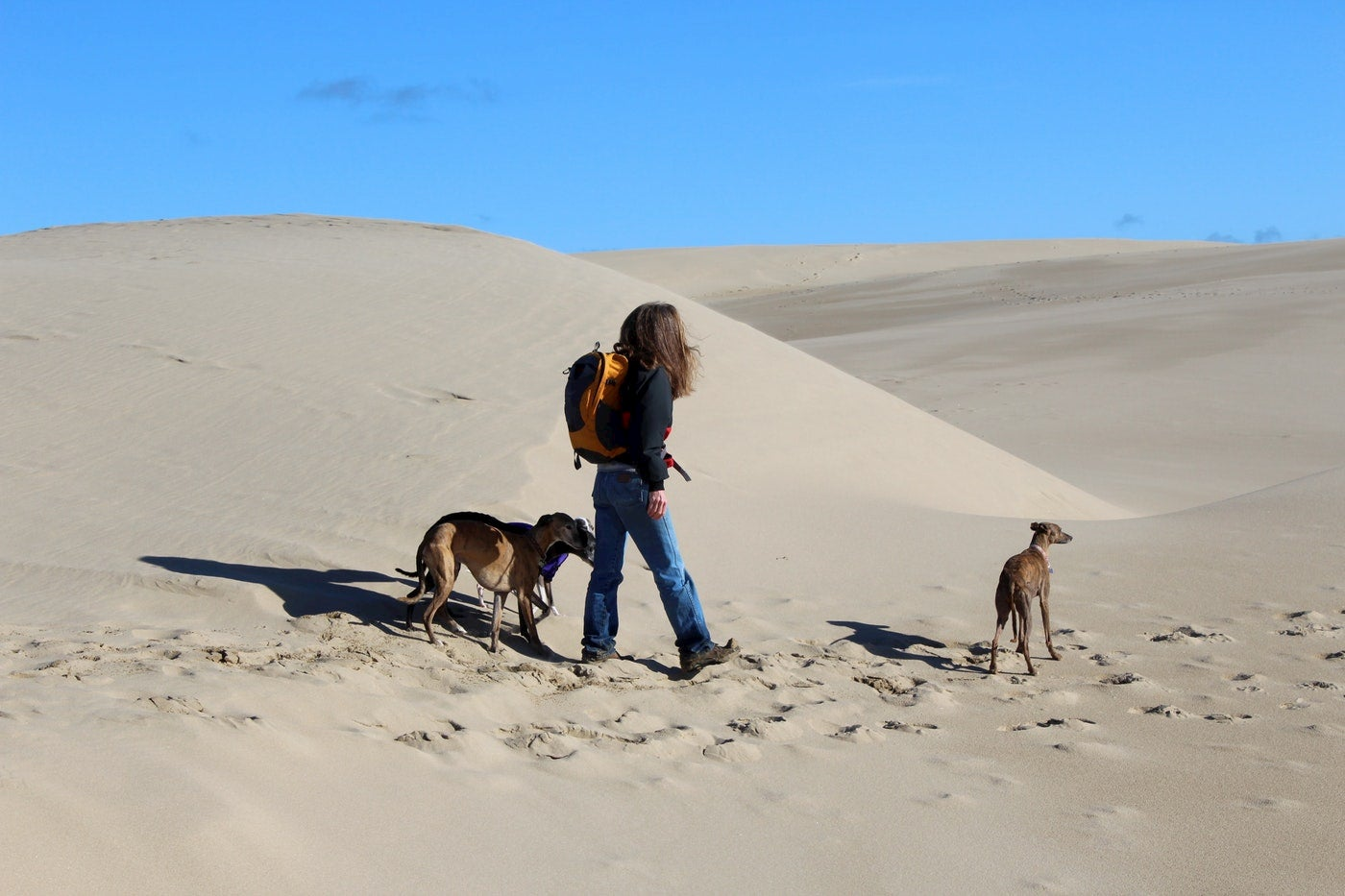 Women walking through sand dunes with three greyhounds.