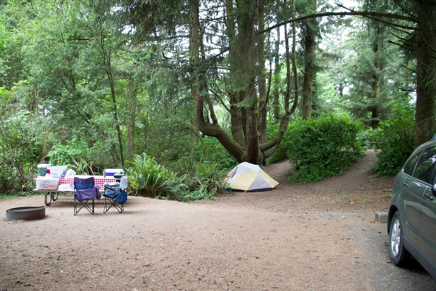 Tent, car, and camp chairs set up in a cleared area in a fern forest.