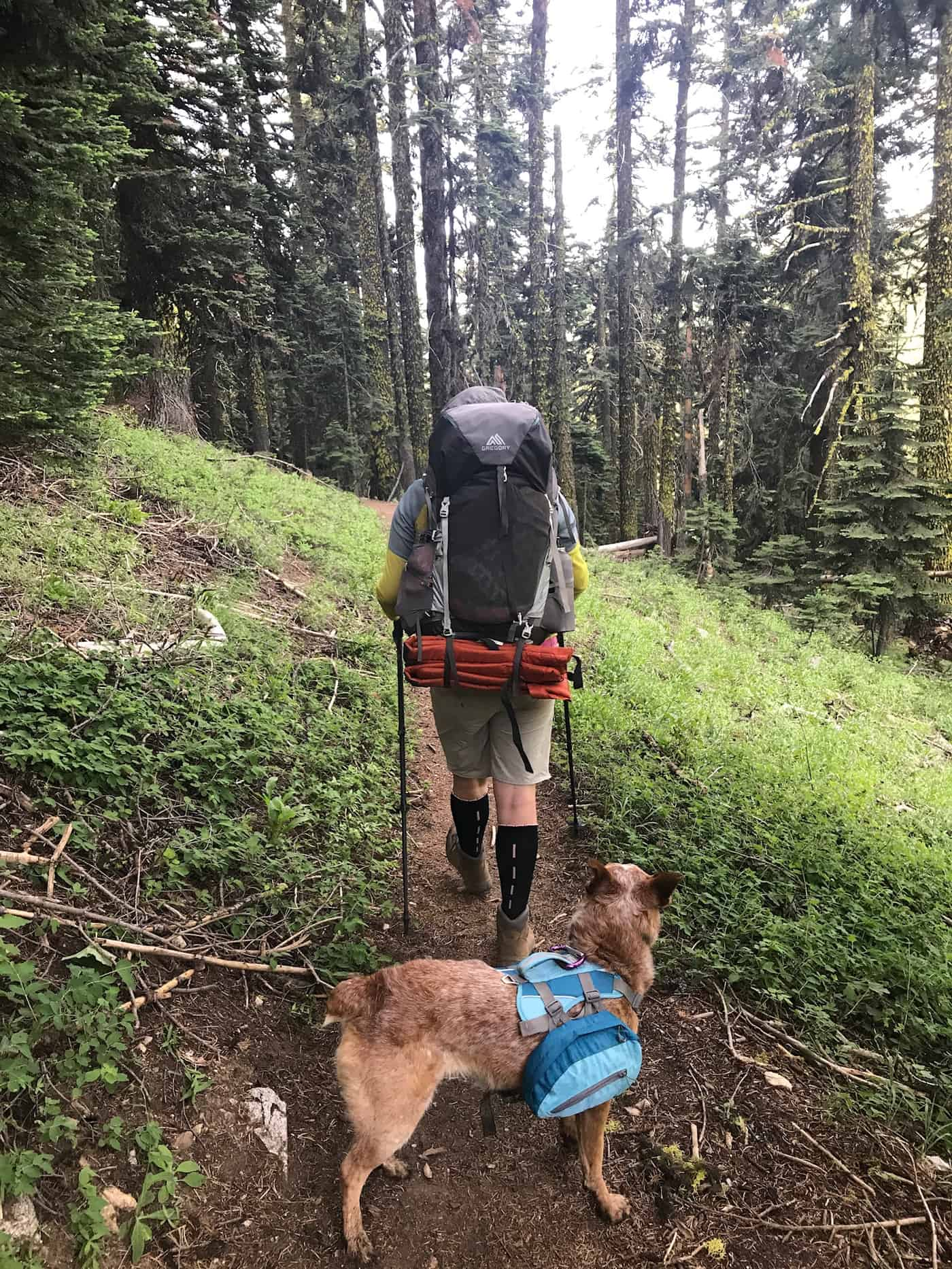 Back view of man backpacking with his dog through forest hillside