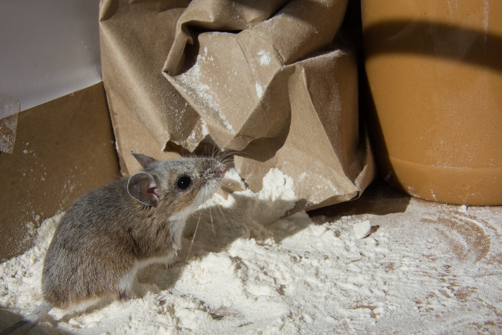 How To Keep Mice Out Of A Camper Van, Trailer, or RV