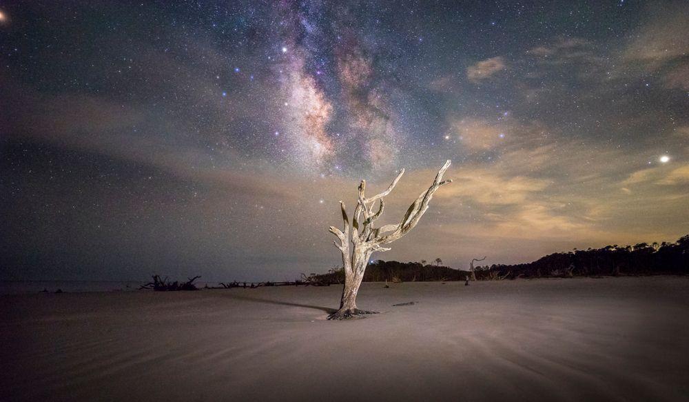 driftwood tree illuminated on the beach beneath vibrant starry sky