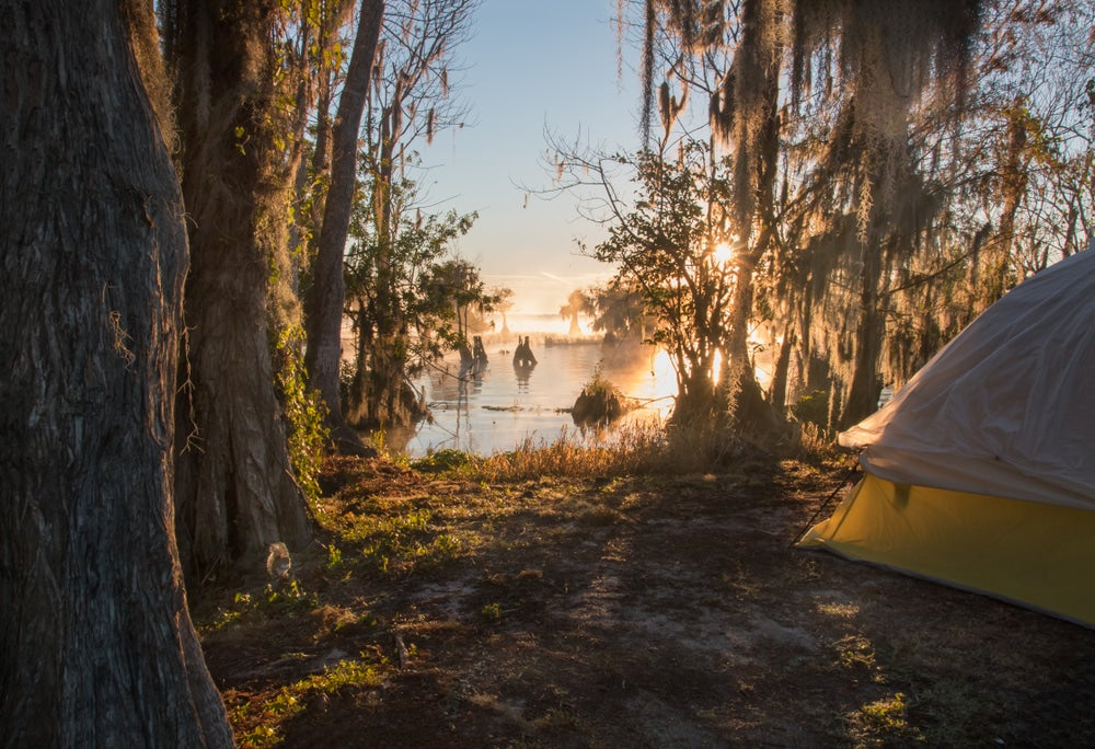 Yellow tent at waterfront campsite with swampy bayou in background