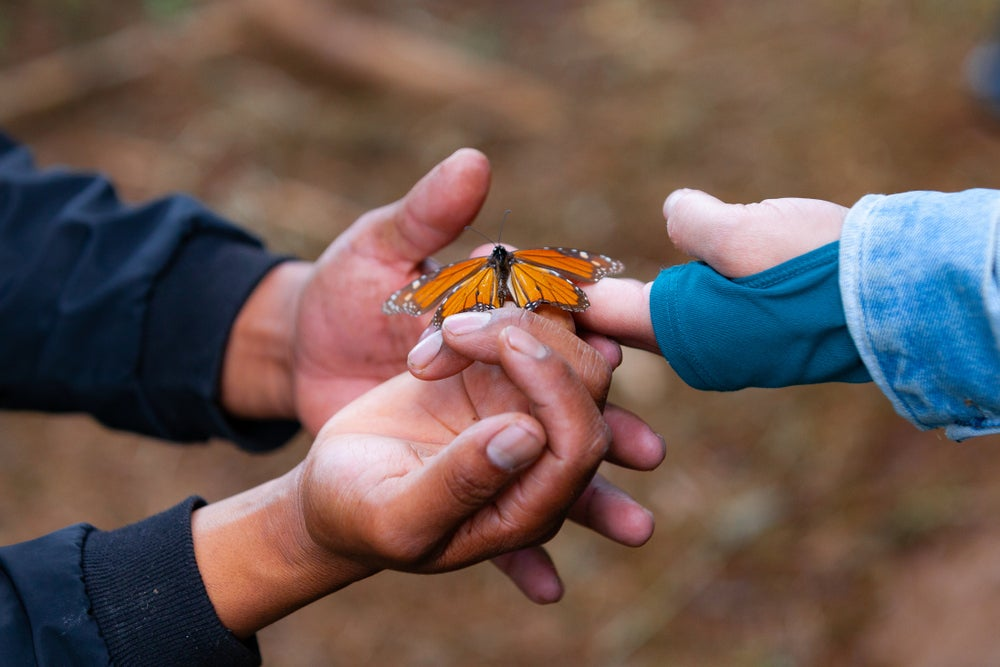 Two people holding a monarch butterfly in their hands.
