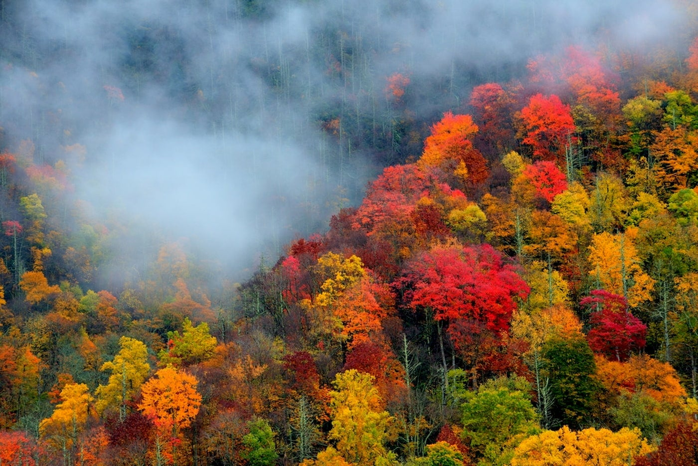 Autumn foliage in the great smoky mountains.