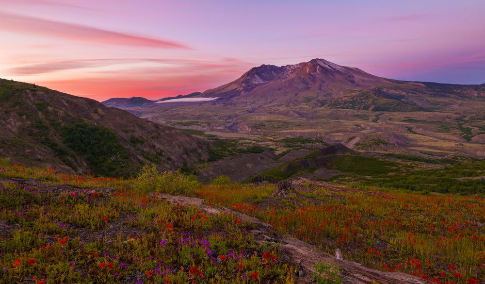 Landscape view of Mt. Saint Helens, an active volcanoe in the U.S., with wildflowers in foreground
