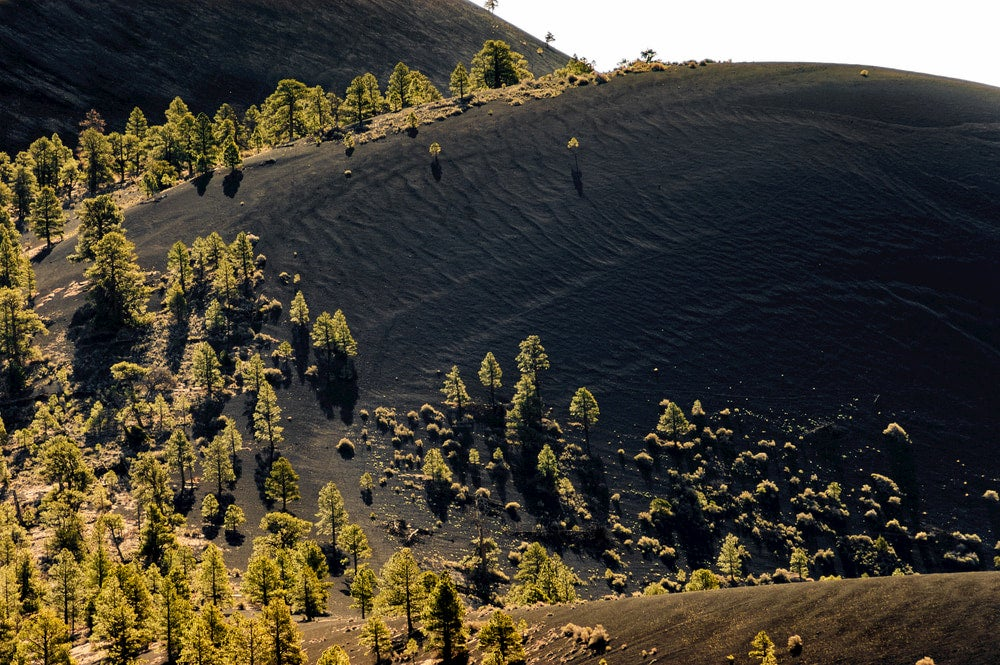 Black volcanic dune with green trees growing from sand