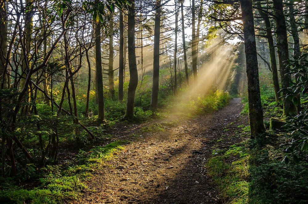 Sun rays shining on part of the Appalachian Trail