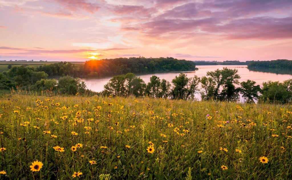 Wildflowers in field with Minnesota waterway and sunset in background