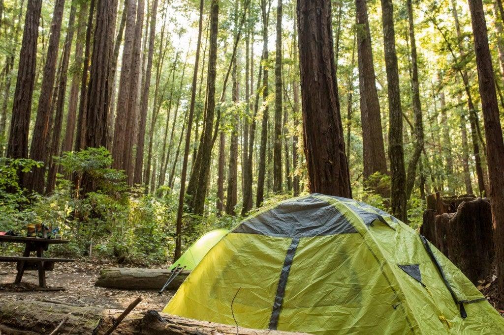 a green tent sitting in a Santa Cruz redwood forest campsite