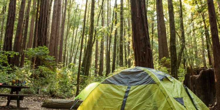 a green tent sitting in a Santa Cruz redwood forest campsite