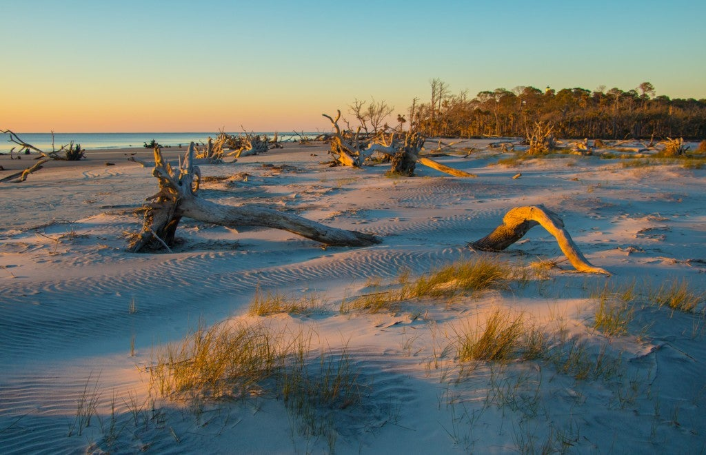 Beach speckled with driftwood trees and dunes at sunrise.