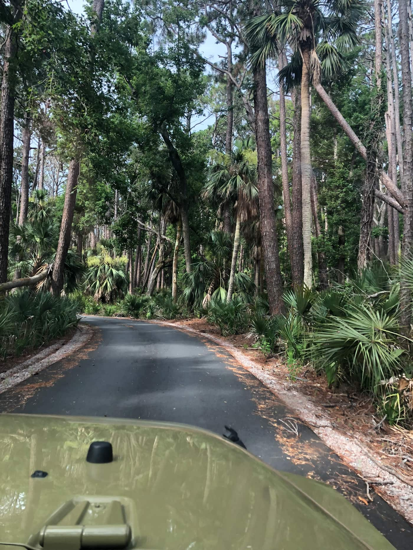 Image through the windshield of a green Jeep of a road surrounded by palms and ferns.