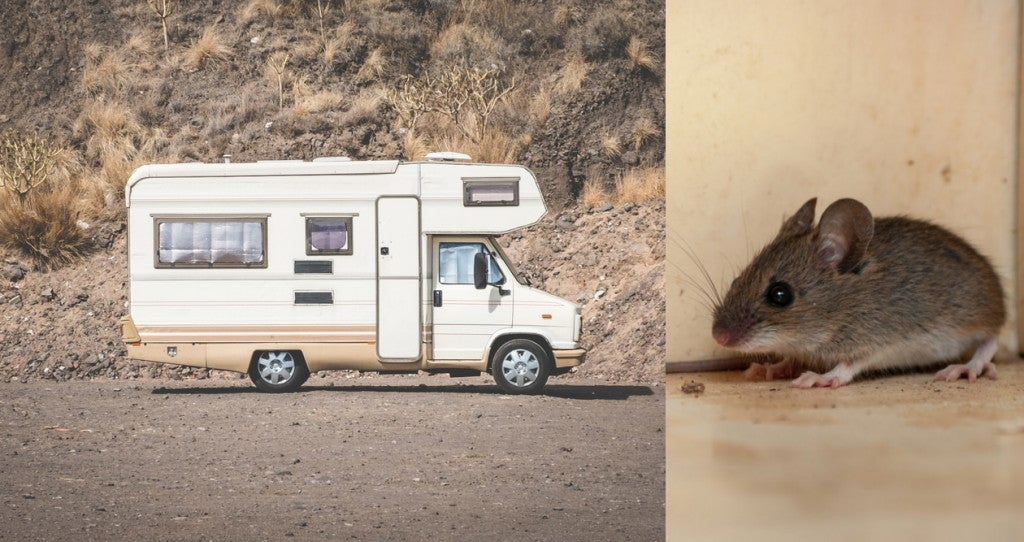 (left) Image of an older RV parked by rock wall (right) image of a mouse