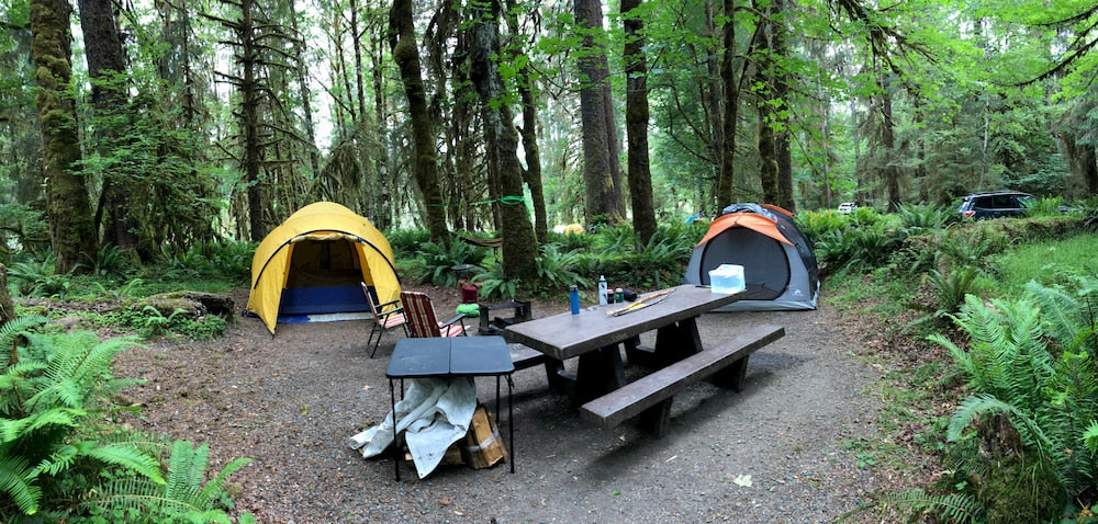 Ferns surround two tents and a picnic table in a northwest rainforest campsite