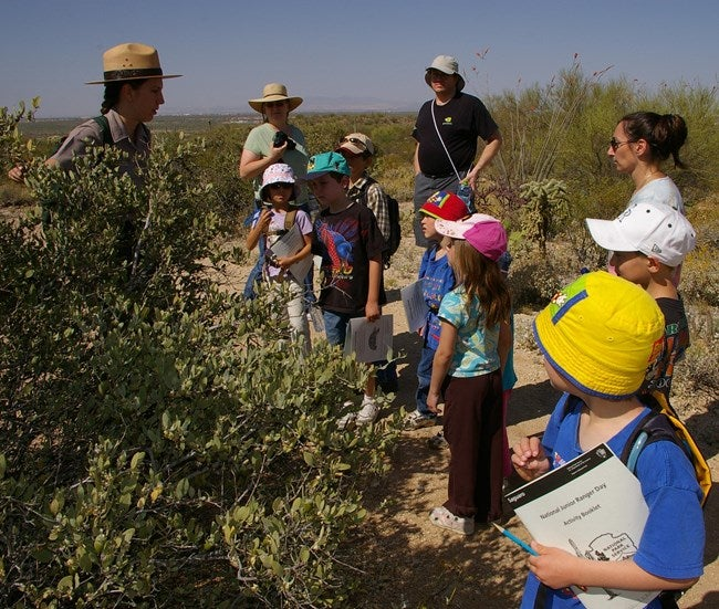 kids participating in a junior ranger program at Saguaro National Park, inspecting vegetation.