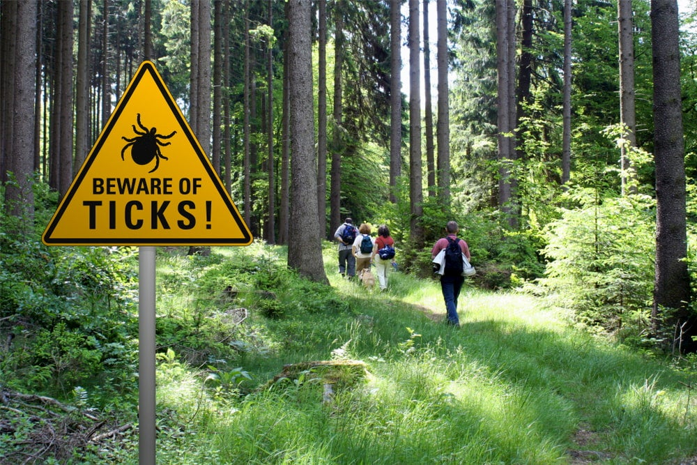 """""""Beware of Ticks' sign beside hiking trail in the forest."""