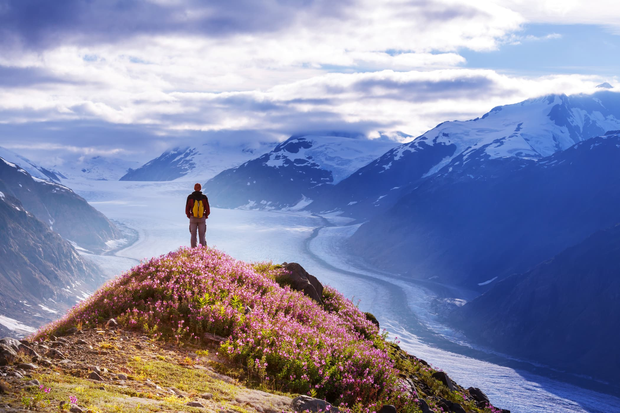 hiker standing on flower covered peak overlooking glacier field in Wrangell St Elias national park