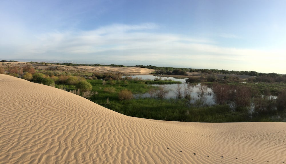 a view from a sand dune over lakes at indiana dunes national park