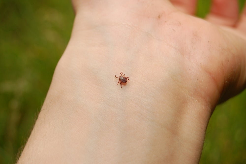 Tick crawling on arm.