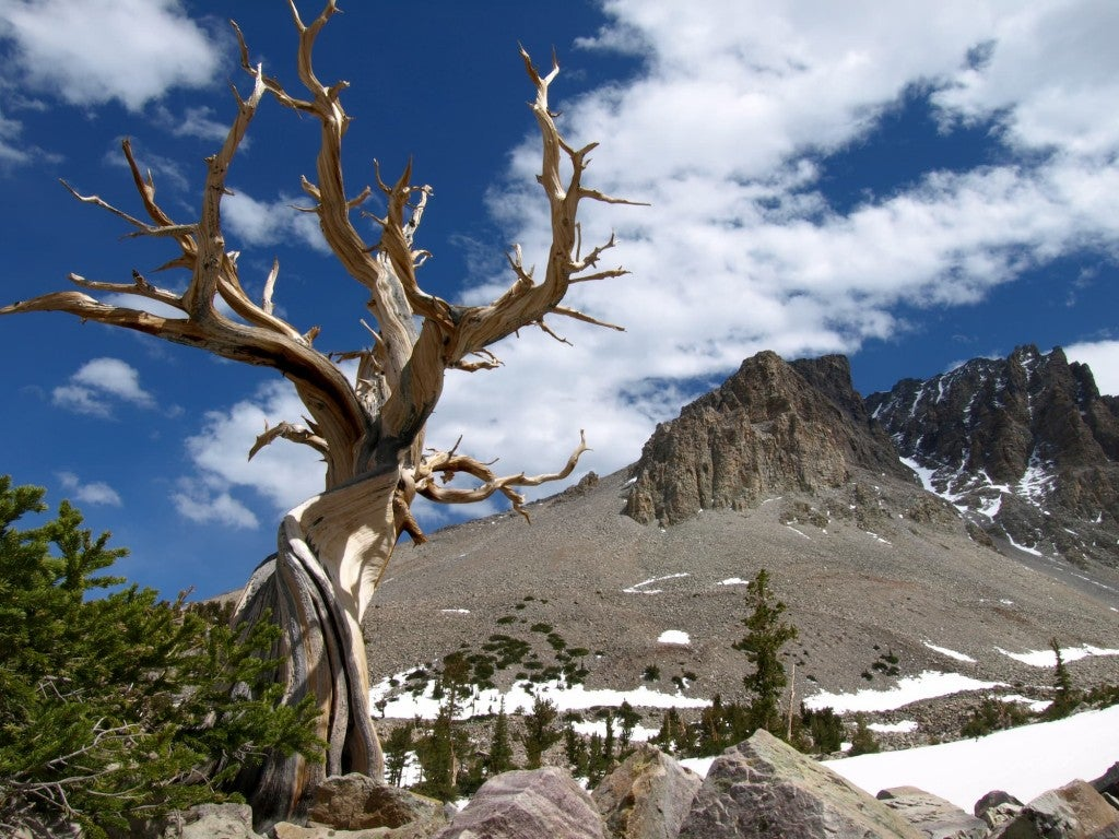 Juniper tree in foreground with mountains in background