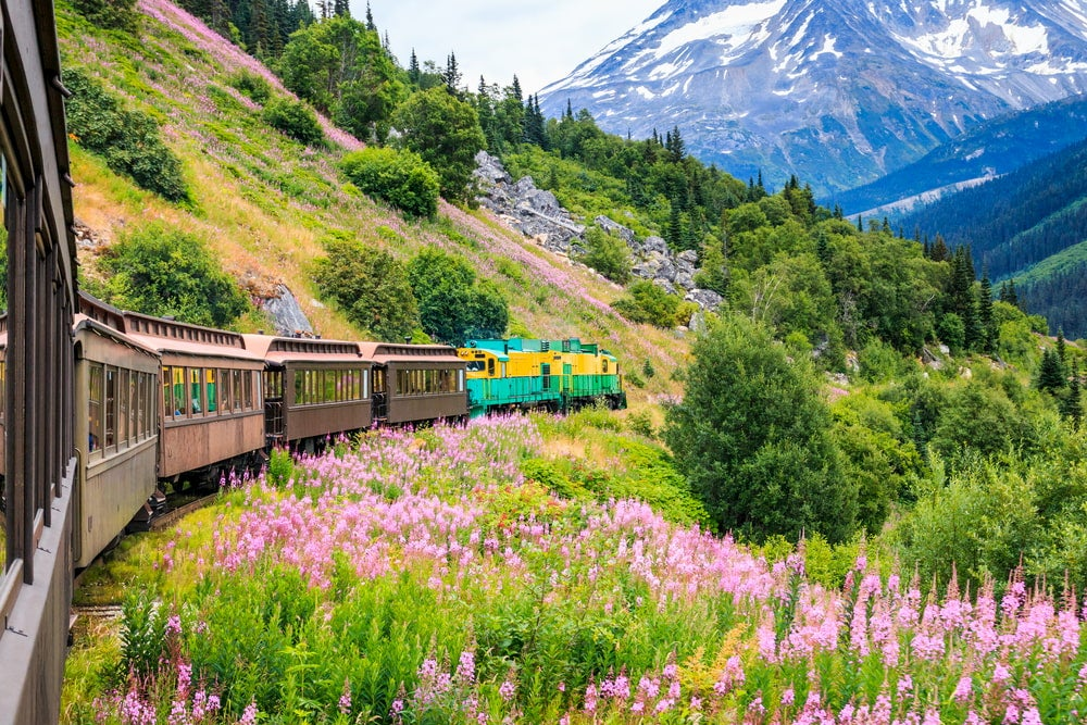 Colorful train running through wildflowers and mountains side