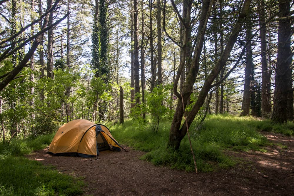 yellow tent in lush green forested campsite