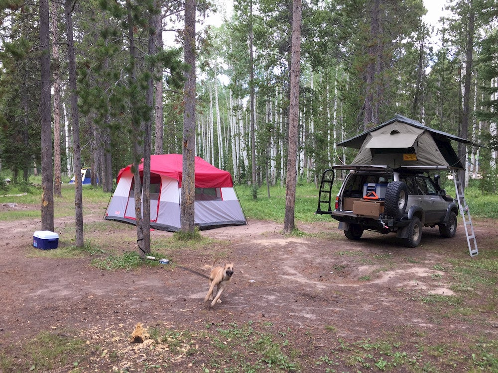 Dog running in campsite with tent and car in background