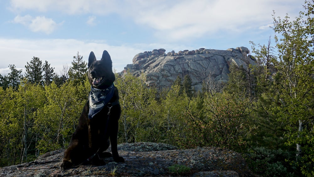 Black dog sitting up with rocks behind him
